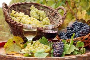 Travis Roy Foundation Wine Tasting