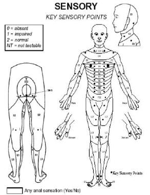 spinal cord injury levels  u0026 classification